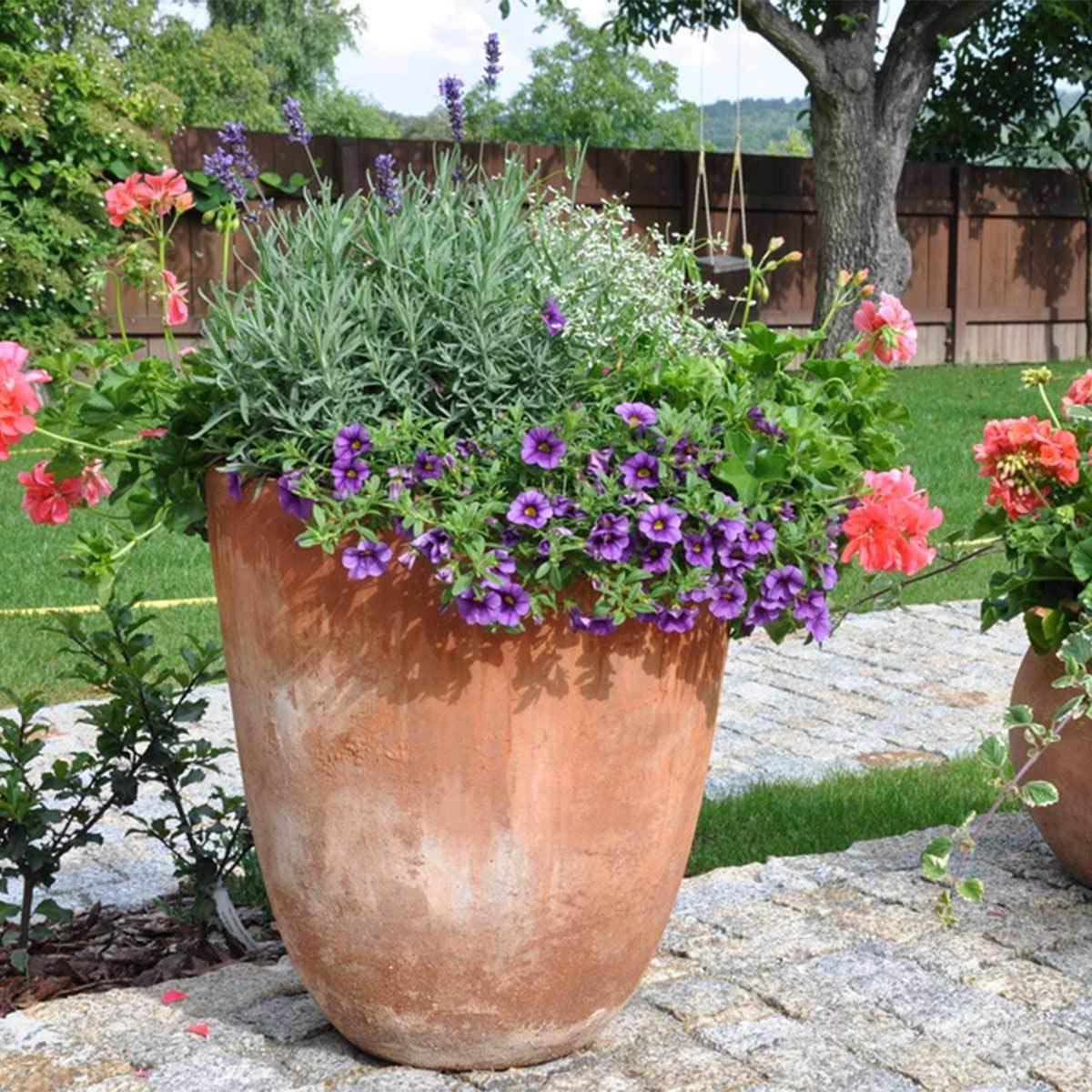 Late summer container plants the family handyman petunias izmirmasajfo