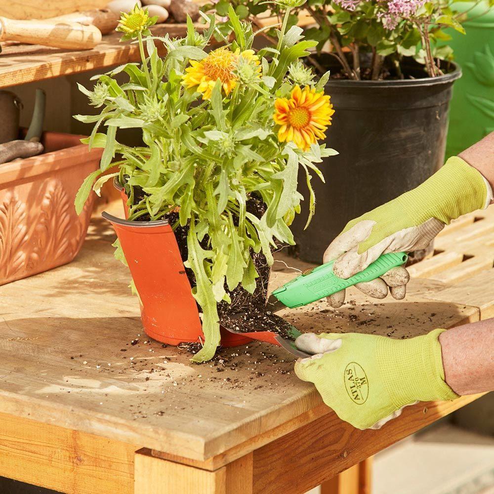 replanting flowers