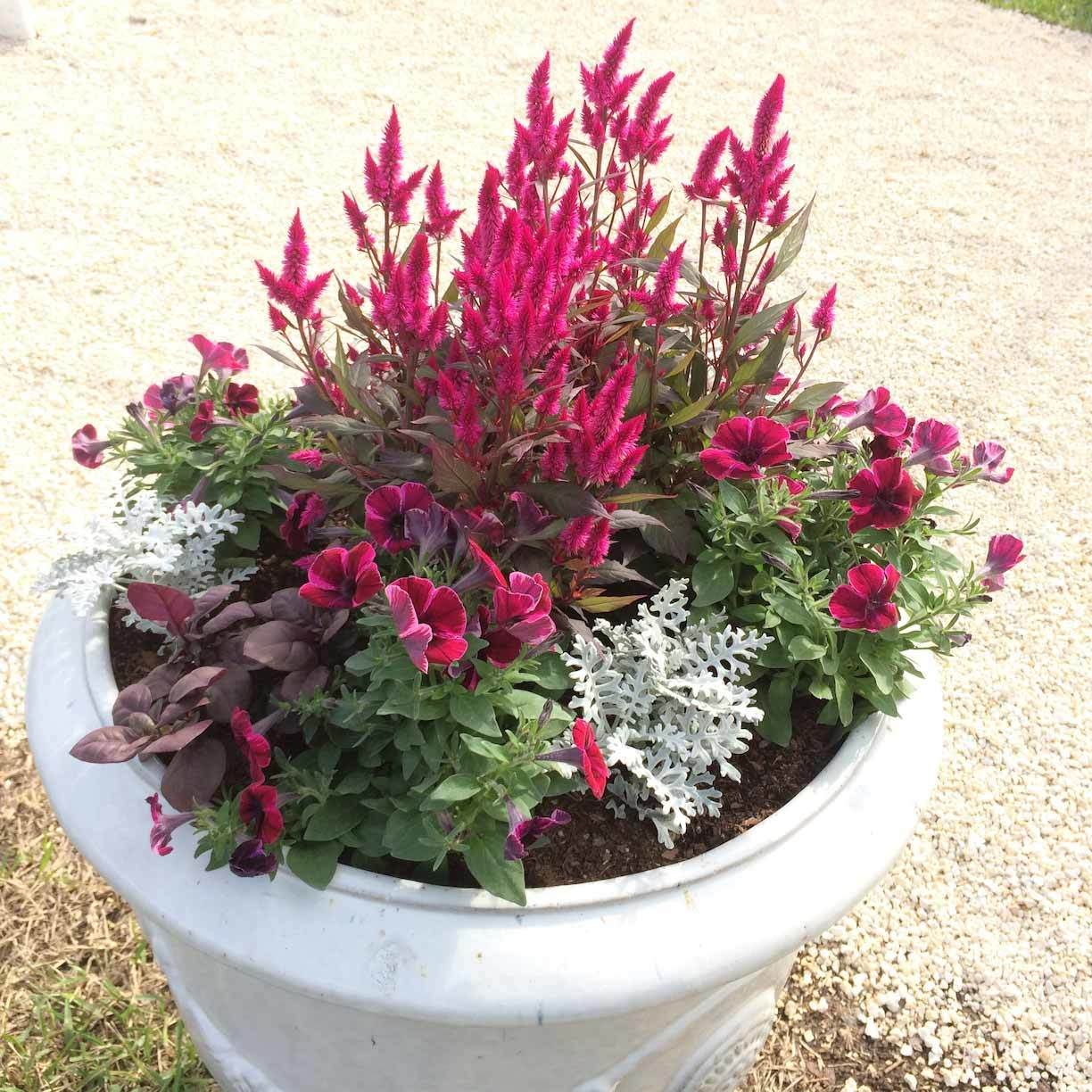Late Summer Container Plants The Family Handyman