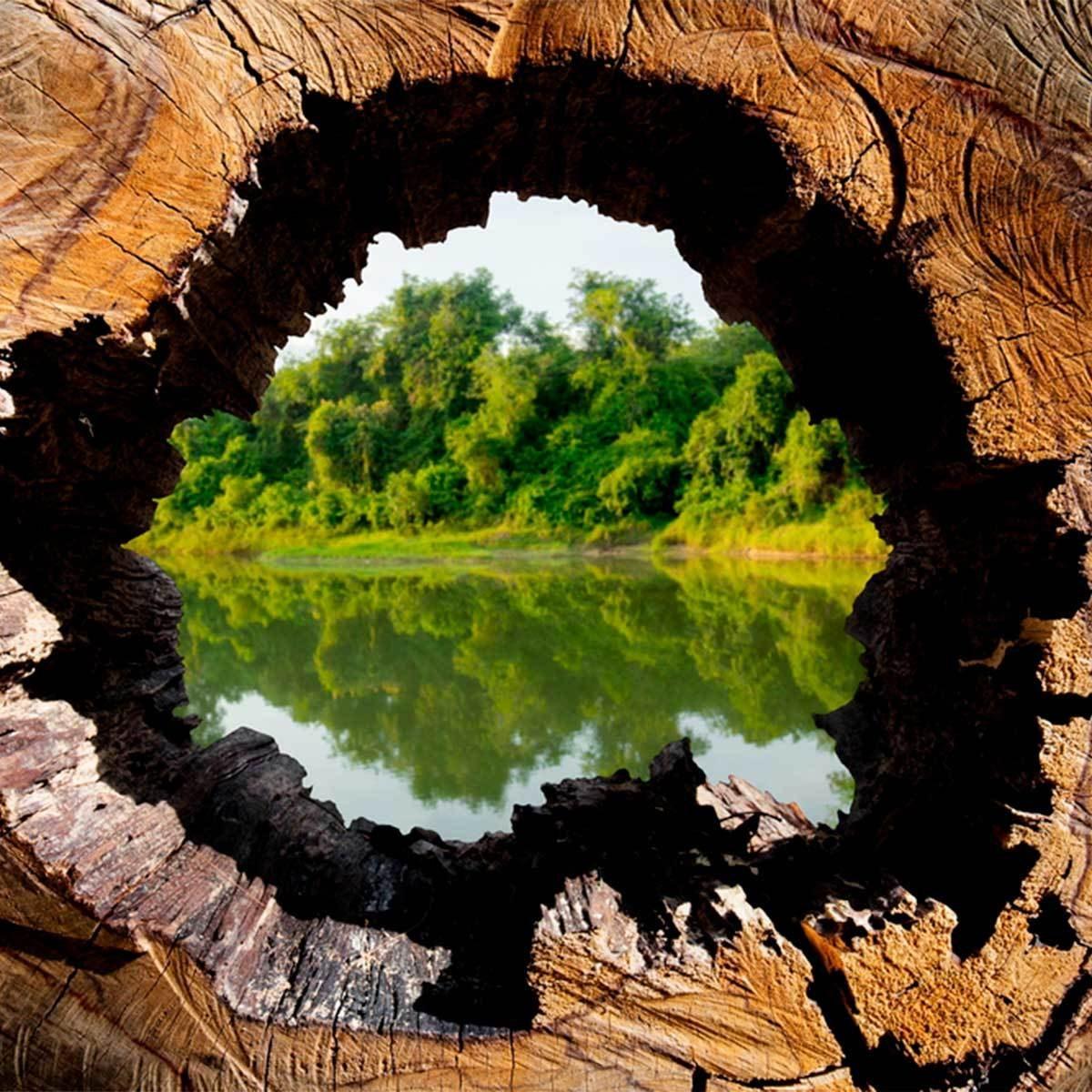 Restore a Lake