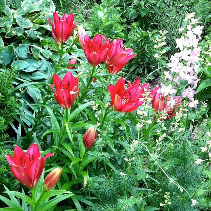 Lilies and Larkspur