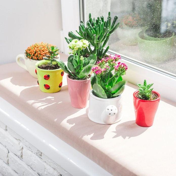 Home plants, succulent flowers