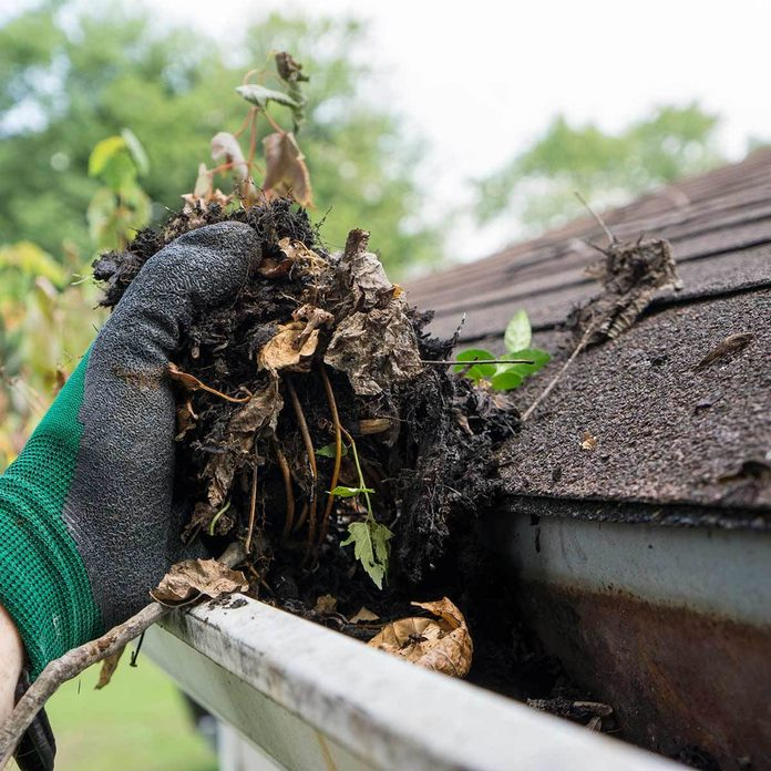 Clean up roof and gutters