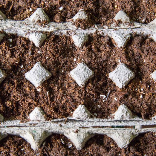 Seeds planted in egg cartons how to start seeds indoors