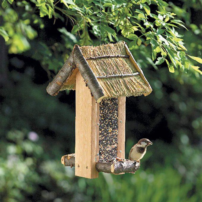 bird feeder with bird