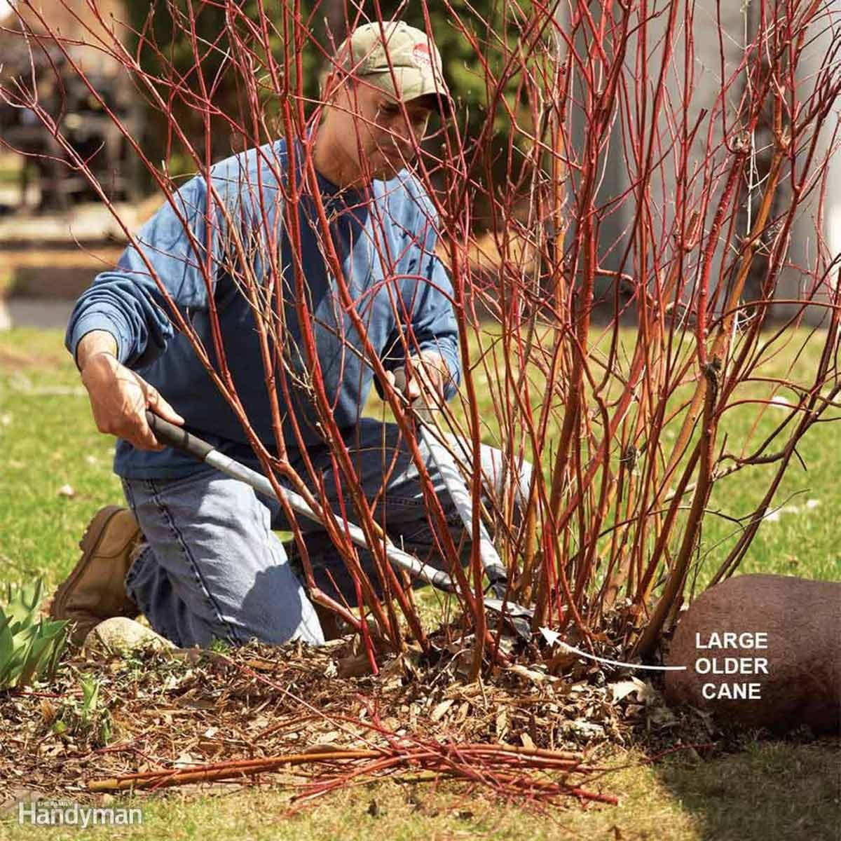 clear away dead limbs and branches bush