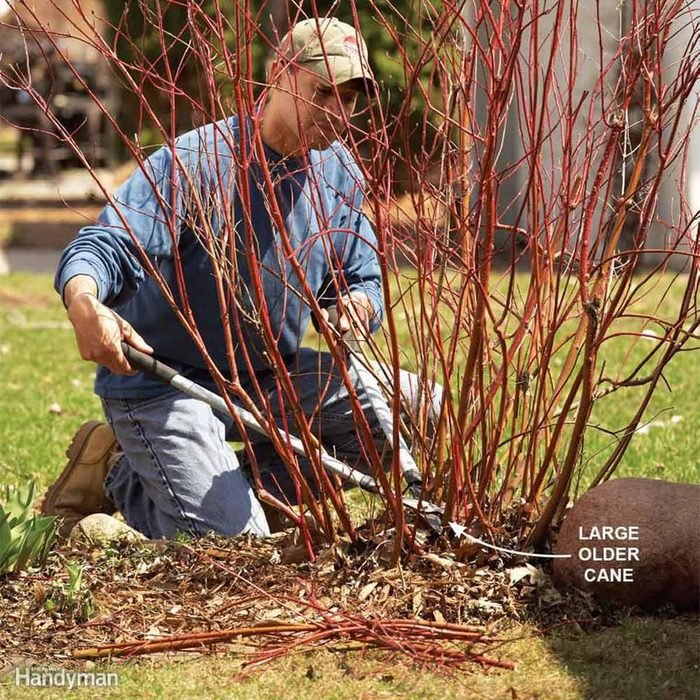 Clear Away Dead Limbs and Branches