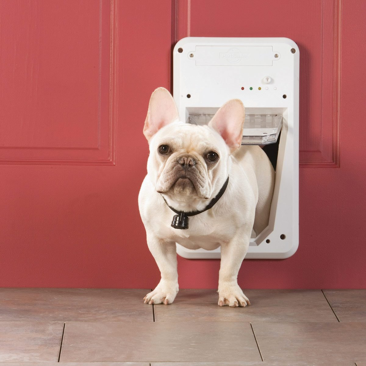 FH10JUN_509_56_M01 french bulldog in doggy door