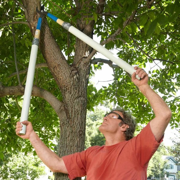 trim a tree with long shears tree pruning