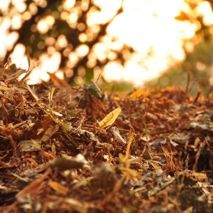 Mulch Your Leaves