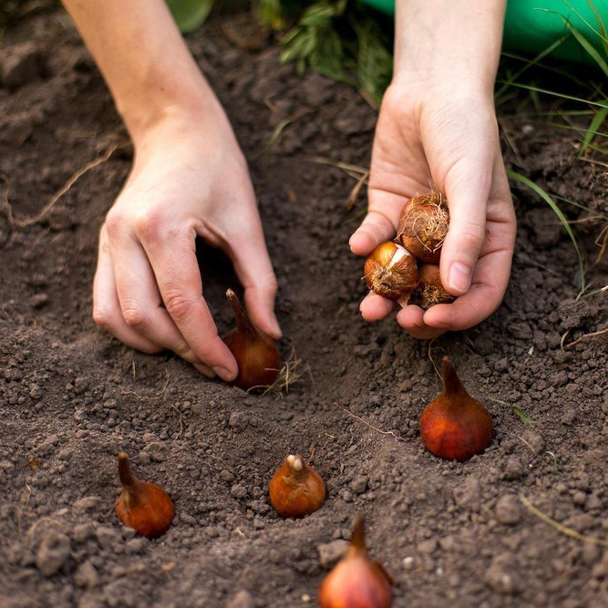 Как и когда сажать картофель весной 2017: благоприятные дни 64