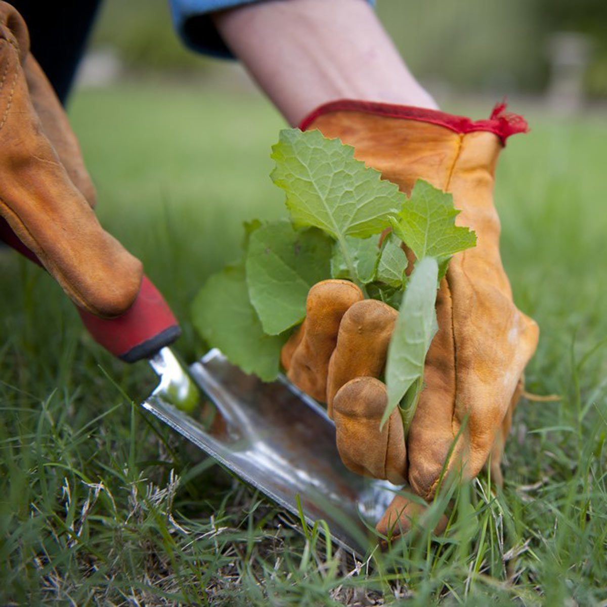 Tackle Weeds