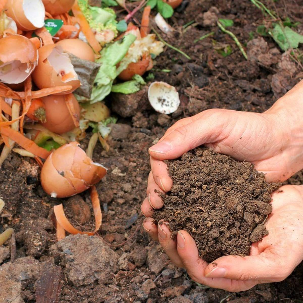 dfh17sep038_160161059_01-1200x1200 compost pile dirt garden egg shells lettuce soil fertilizer