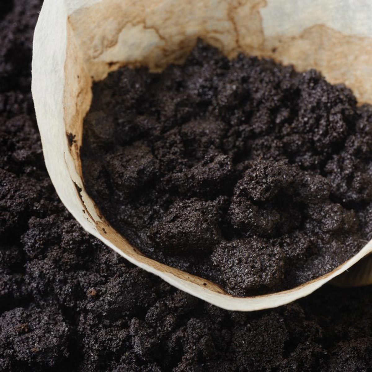 coffee grounds coffee filter