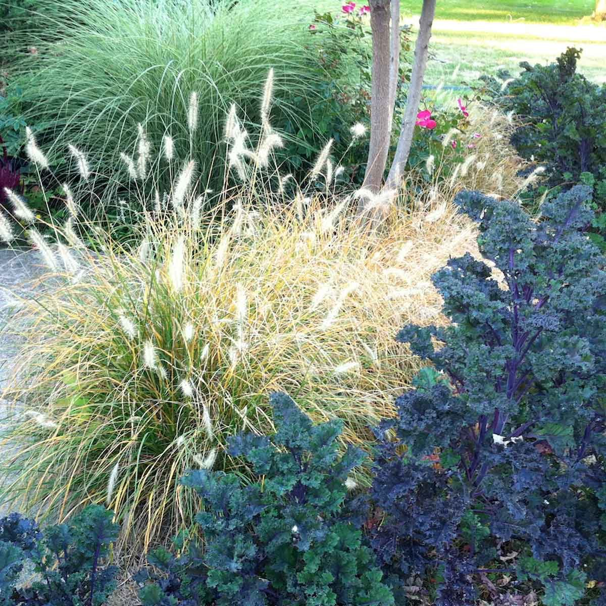 Ornamental grasses you should get to know the family handyman fountain ornamental grass workwithnaturefo