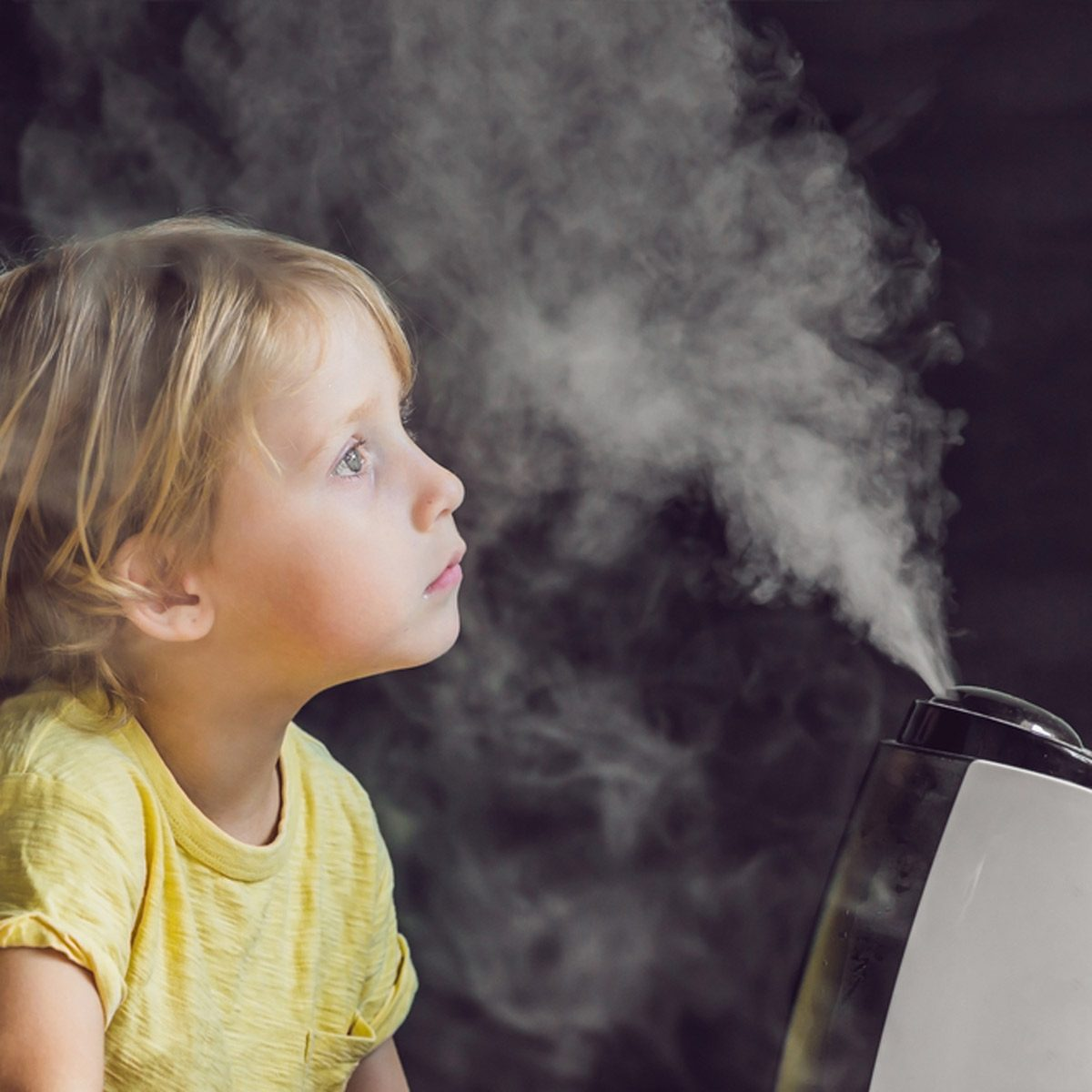 Fight Dry Air and Indoor Allergens