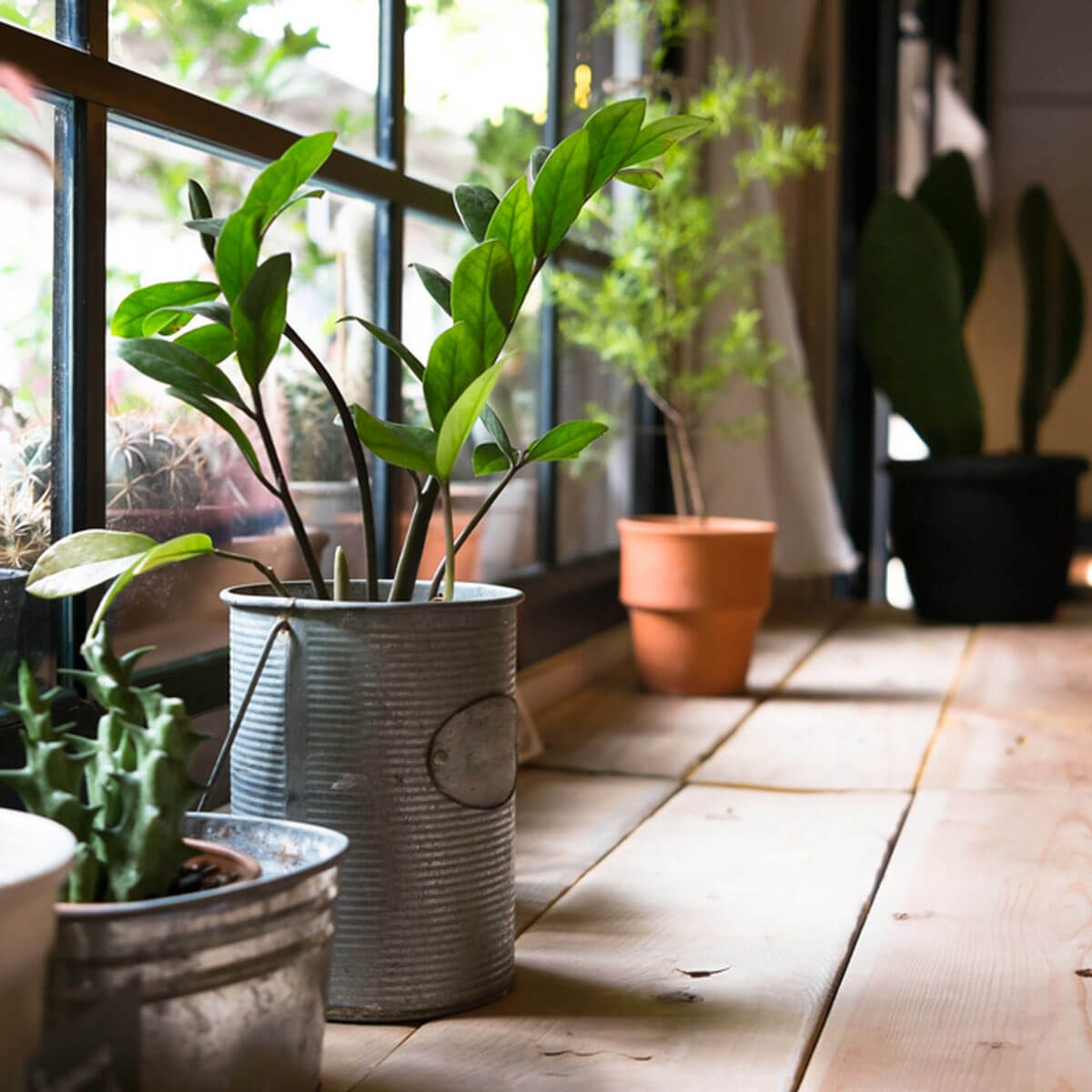 14 Tips for Caring for House Plants Through Winter | The ... House Plant Winter on winter fragrant plants, winter potted plants, winter deck plants, winter hibiscus, winter hardy plants, winter perennial plants, winter interest plants, winter patio plants, winter outdoor plants, winter container plants, winter flowering plants, winter house cookies, great winter plants, winter yard plants, winter porch plants, winter planter plants, winter house art, winter shade plants, winter blooming plants, winter house landscaping,
