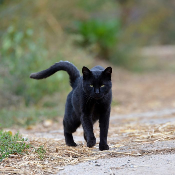 Don't get Cross with a Black Cat