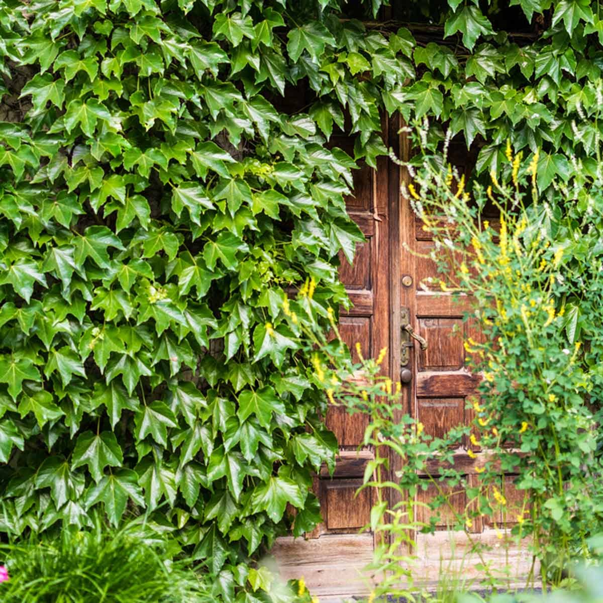 Hidden by a Natural Doorway