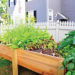 Elevated vegetable garden box