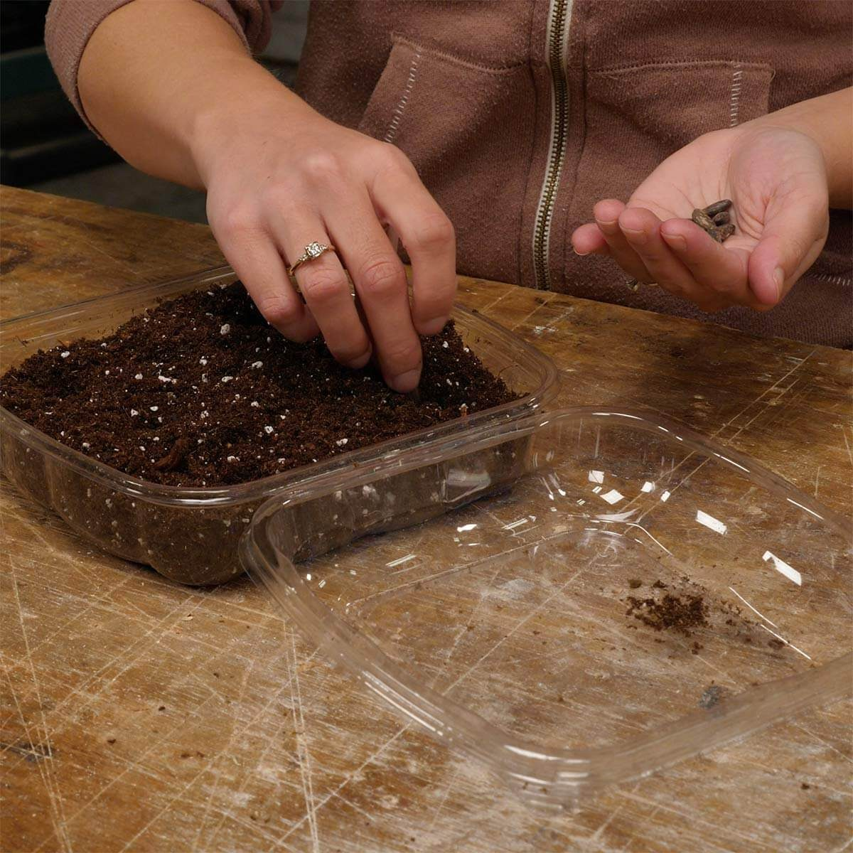 planting seeds in plastic clamshell container