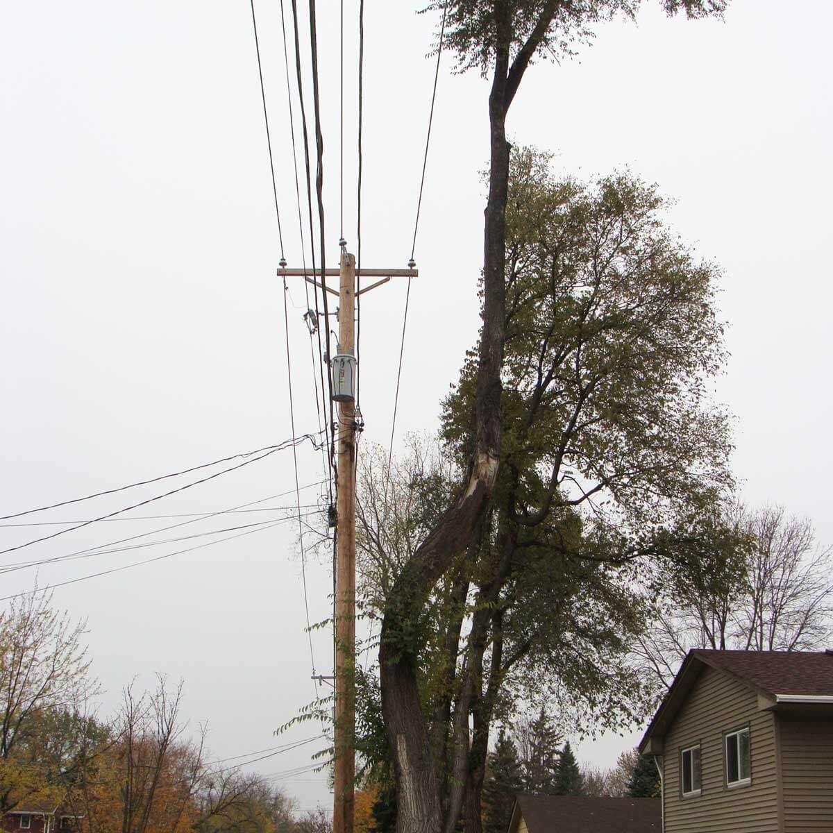 Republican tree?