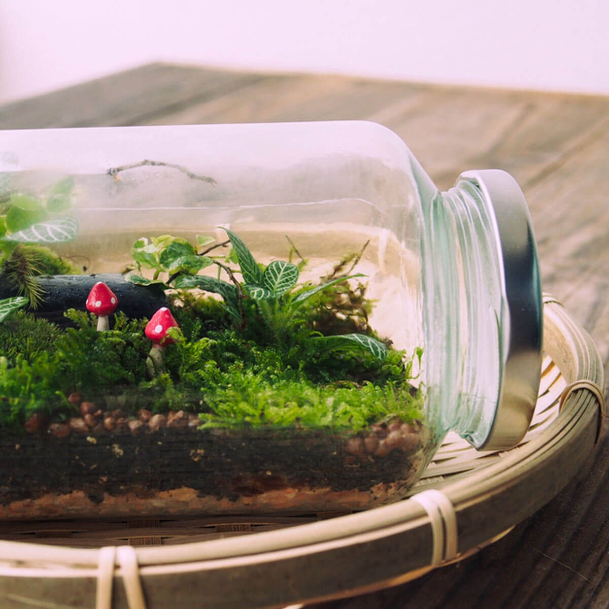 12 Tips For Making A Diy Terrarium How To Build A Terrarium The