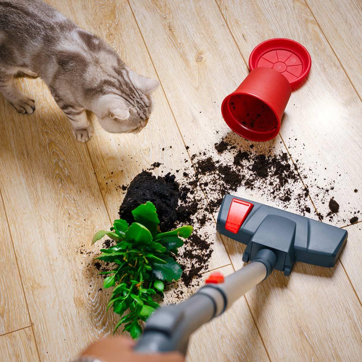 Cordless Home Vacuum