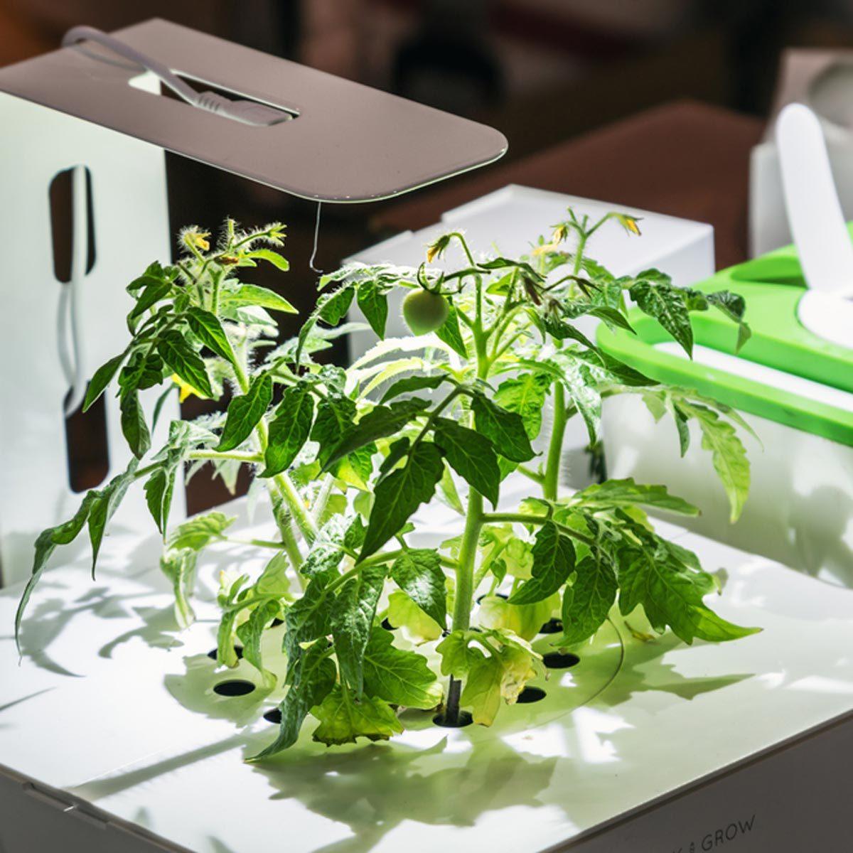 Indoor Herb Kit