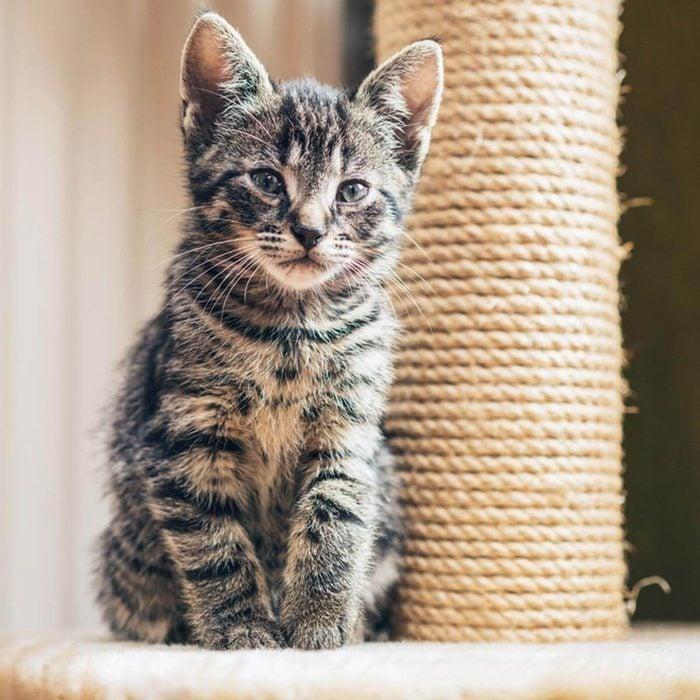 Cat Furniture: A DIY Scratching Post