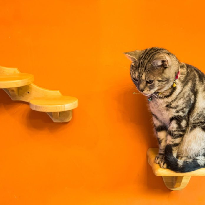 11 Awesome Ideas for DIY Cat Furniture