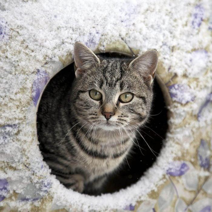 Cat Furniture: Outdoor Cat House