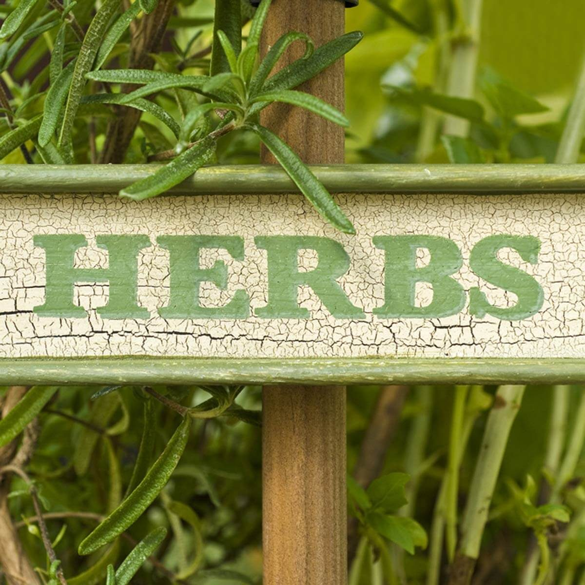 26 Incredible Gift Ideas For Gardeners