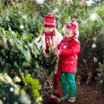 The 10 Best Real Christmas Tree Species