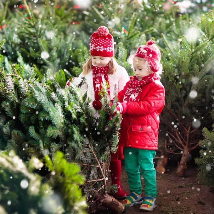 kids-and-christmas-trees-shutterstock_715619827 christmas tree species