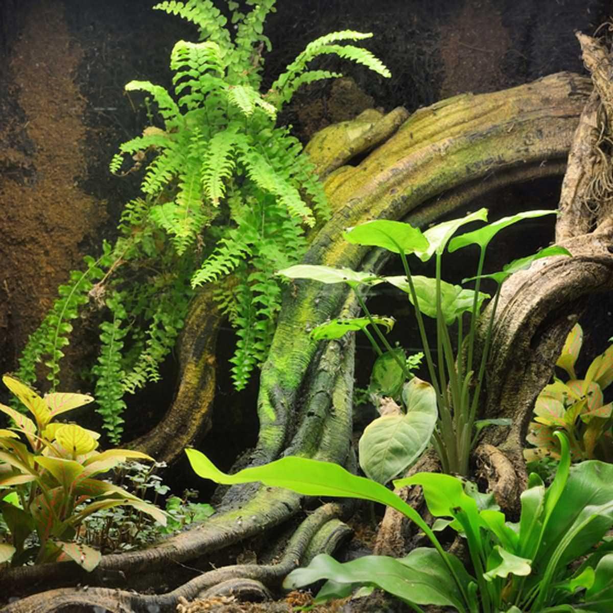 Plants, Plants, Plants