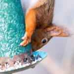25 Crazy Attempts at Preventing Squirrels From Reaching Bird Feeders