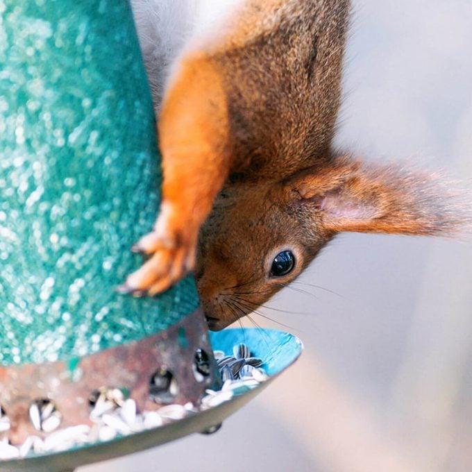 bird feeder squirrel