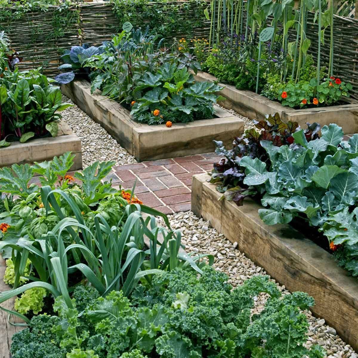 shutterstock_527880916 raised garden beds vegetables plants