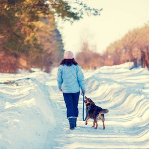 12 Ways to Keep Your Dog Warm Outside