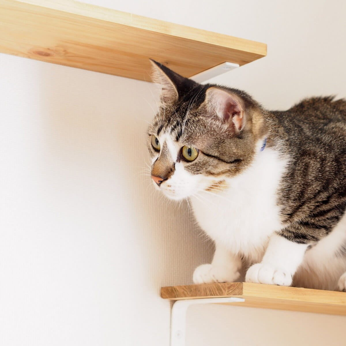 11 awesome ideas for diy cat furniture | the family handyman