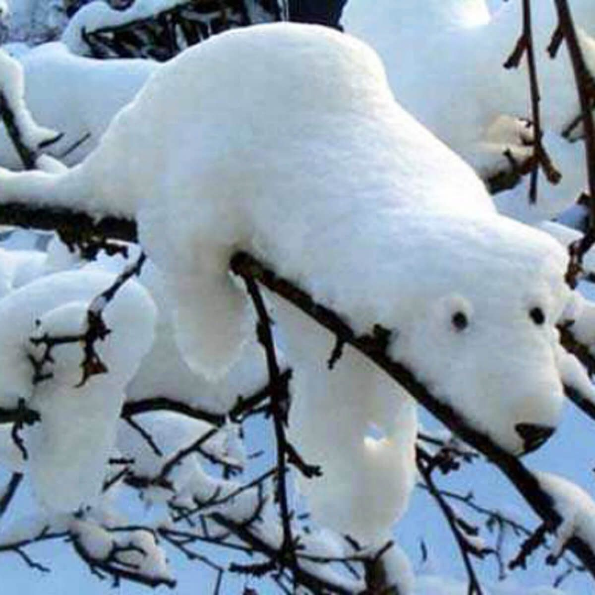 Let Nature do the Sculpting