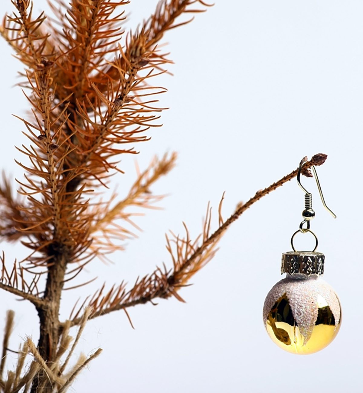 If Your Christmas Tree Is Dying, Here's How to Fix It | The