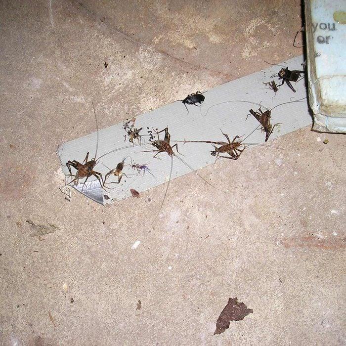 Cricket Trap