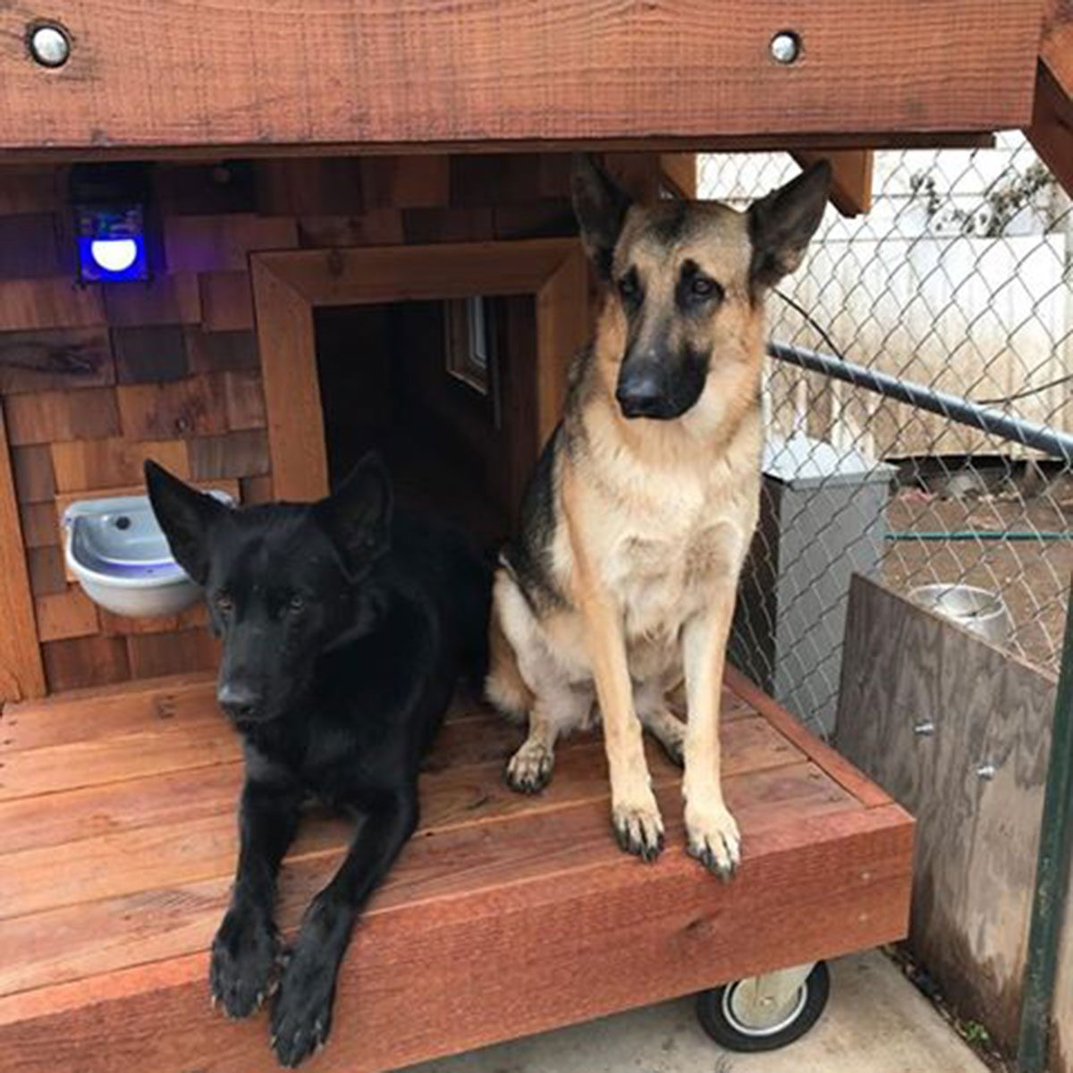 dogs enjoying dog house