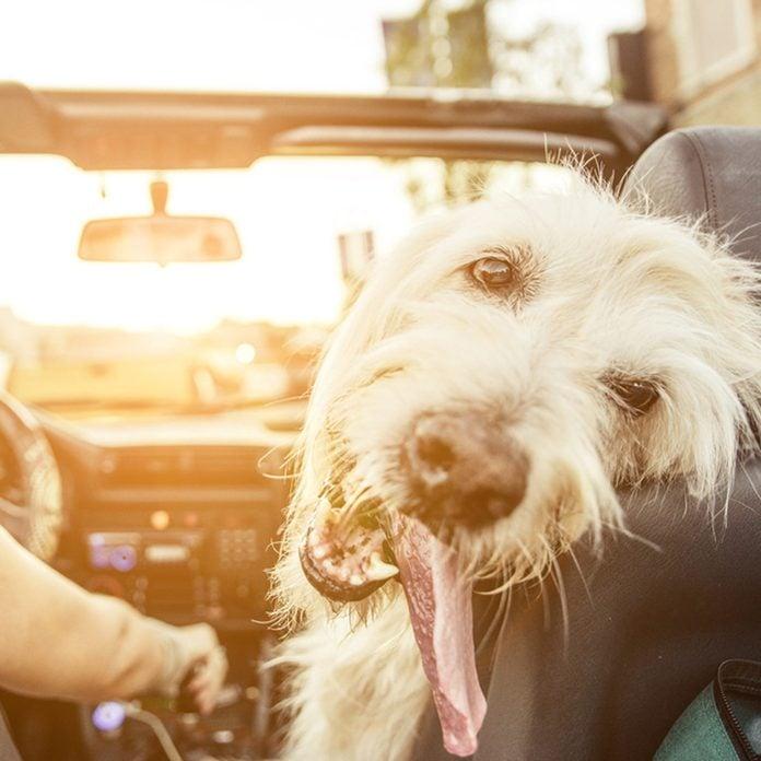 shutterstock_331376426 dog pet in car ride convertible