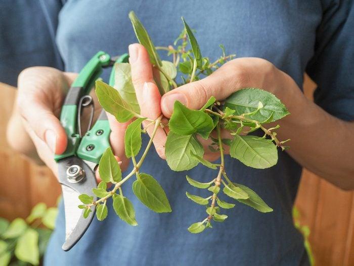 Trimming Plant.