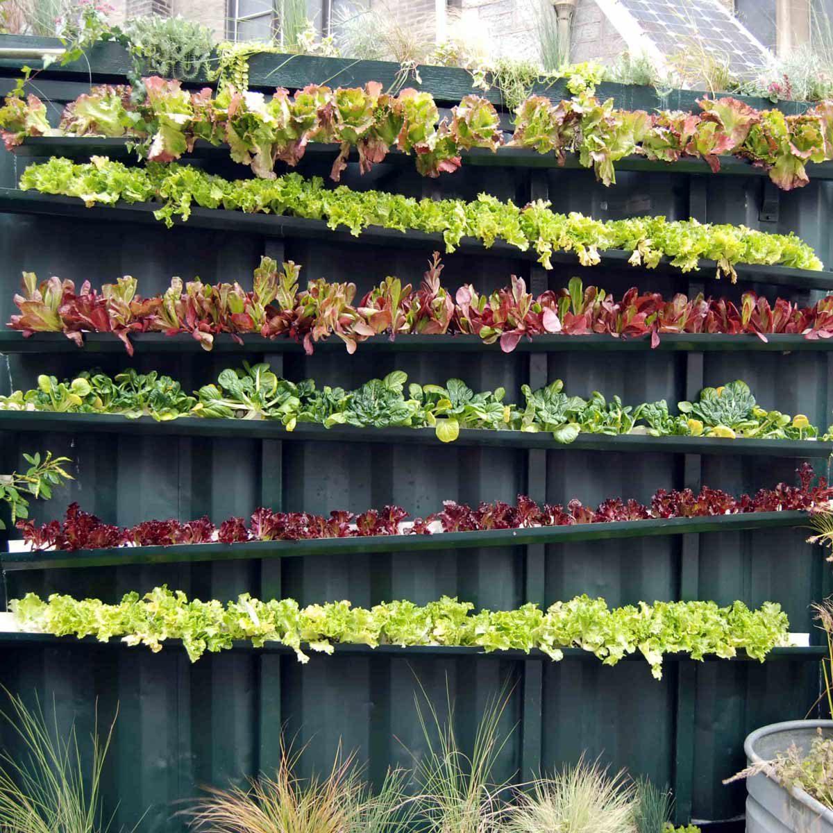rain gutters planter