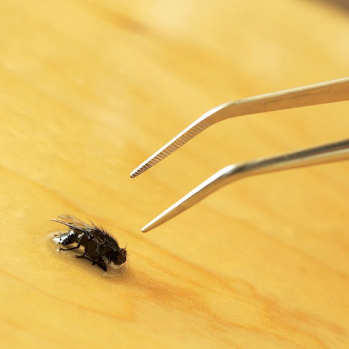 Remove-bug-from-finish-with-tweezers