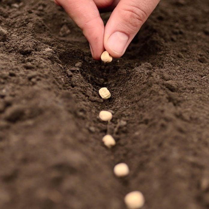 shutterstock_144755131 planting plant seeds gardening